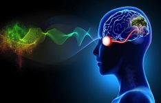 یافته جدید محققان: چشم سیگنال غیرمنتظره به مغز ارسال میکند